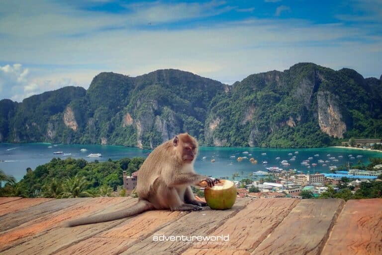 Phi Phi Islands with Siam Adventure World-46