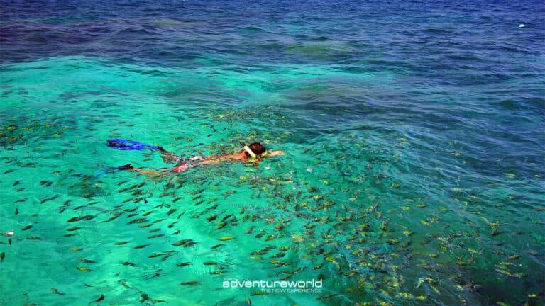 Underwater with Siam Adventure World