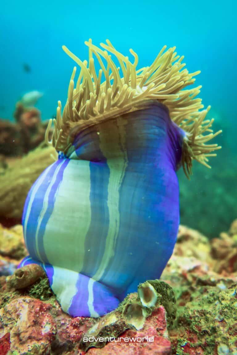 Underwater with Siam Adventure World-8