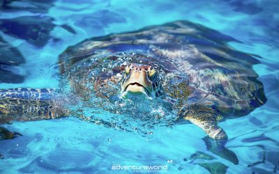 Turtle in Similan Islands
